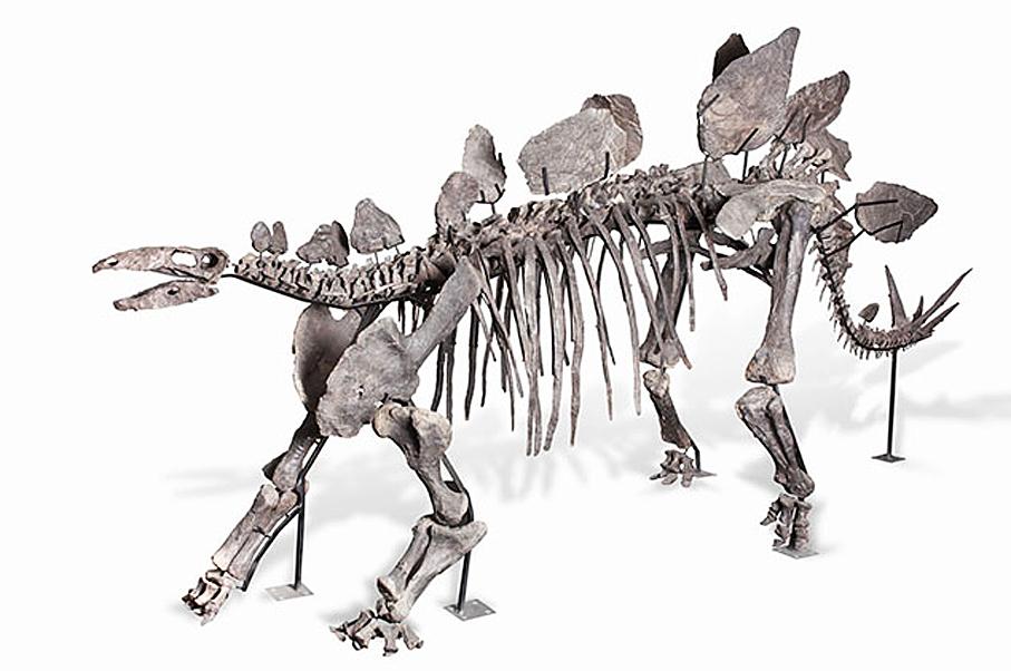 1Dinosaur